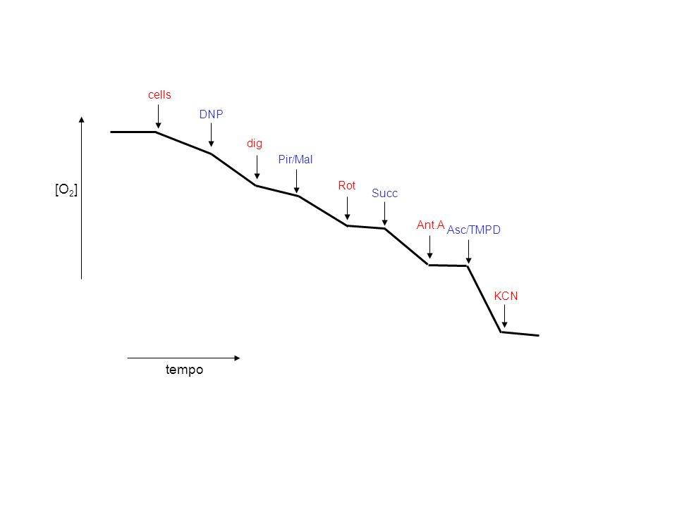 cells DNP [O2] tempo dig Pir/Mal Rot Succ Ant.A Asc/TMPD KCN